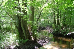 ZPK Dolina rzeki Pileszy 3,59 ha